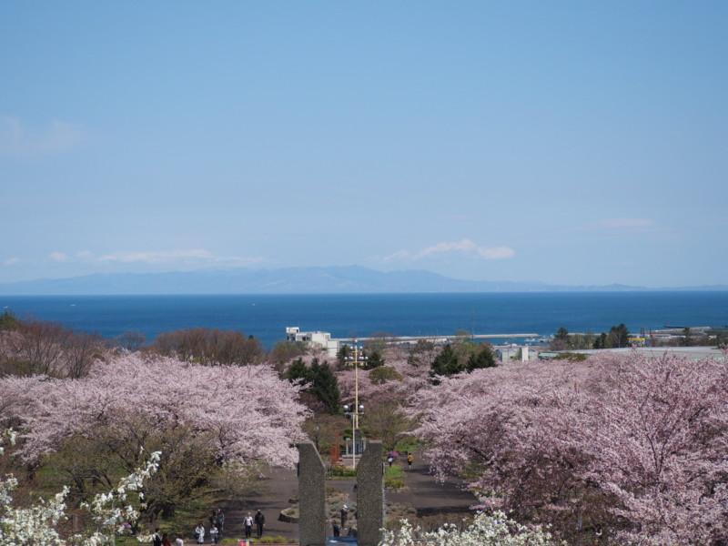 森町オニウシ公園の桜
