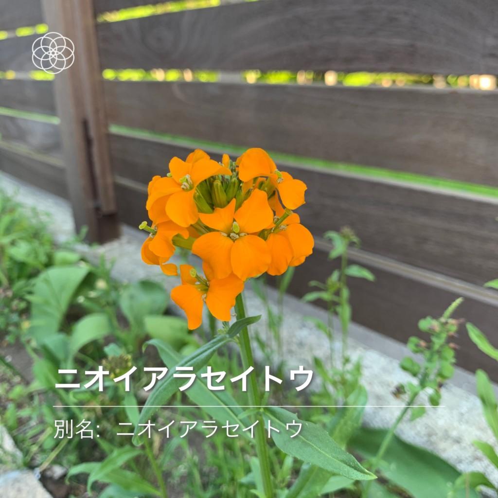 紫竹ガーデンワイルドフラワーミックス